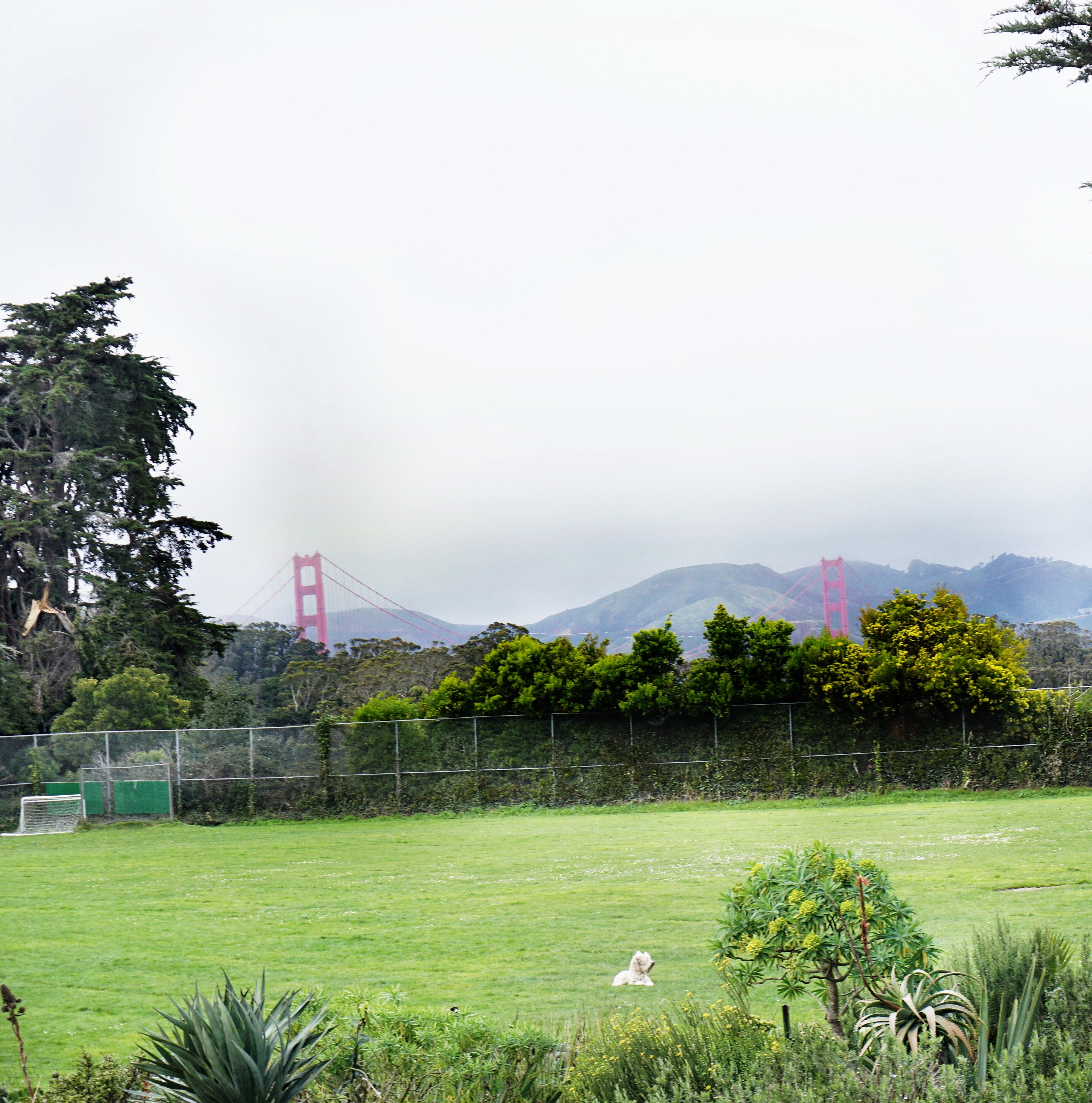Presidio_Heights_Golden_Gate_view