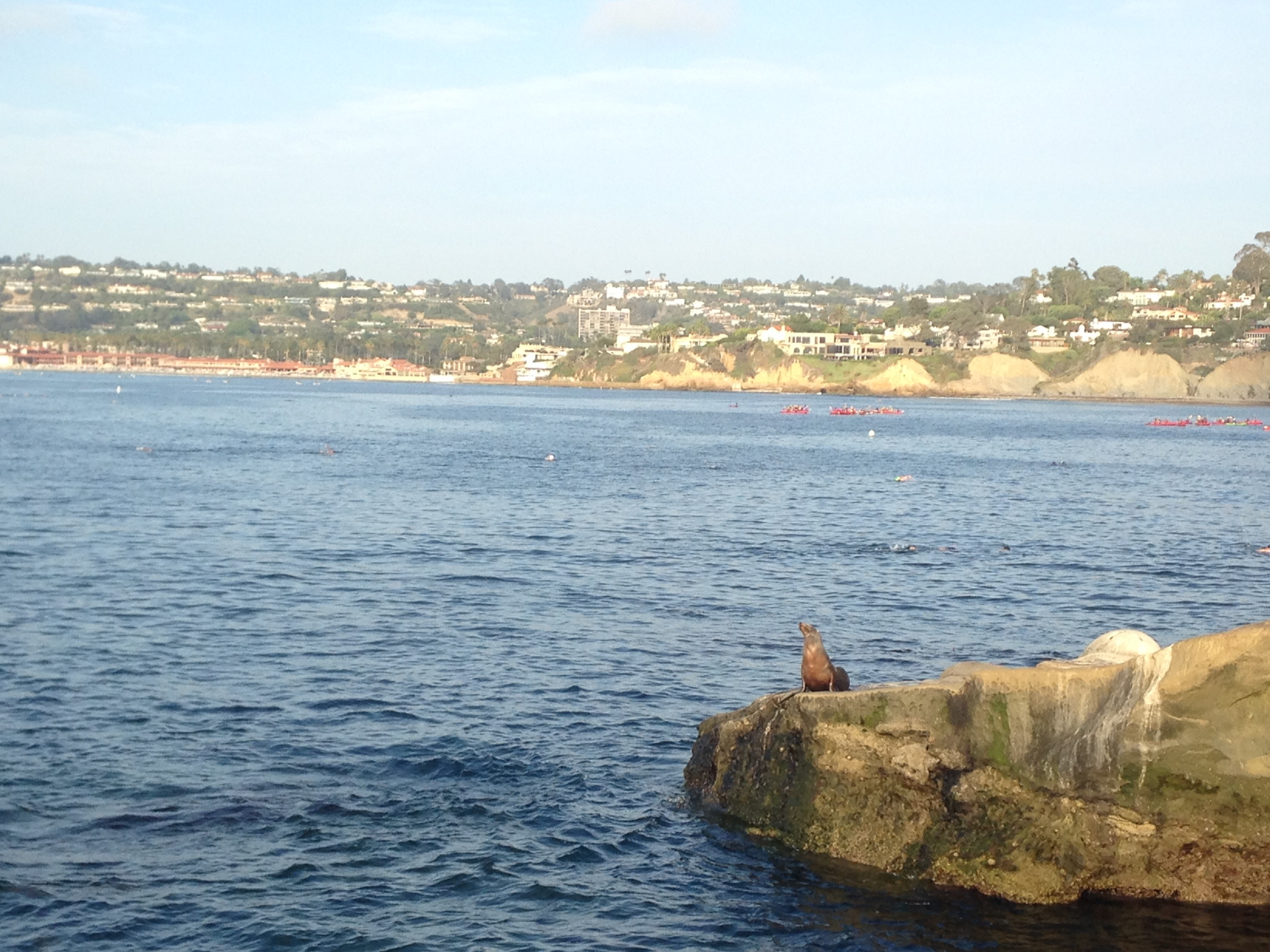Enjoyable A Locals Guide To La Jolla San Diegos Jewel Her Travel Theyellowbook Wood Chair Design Ideas Theyellowbookinfo
