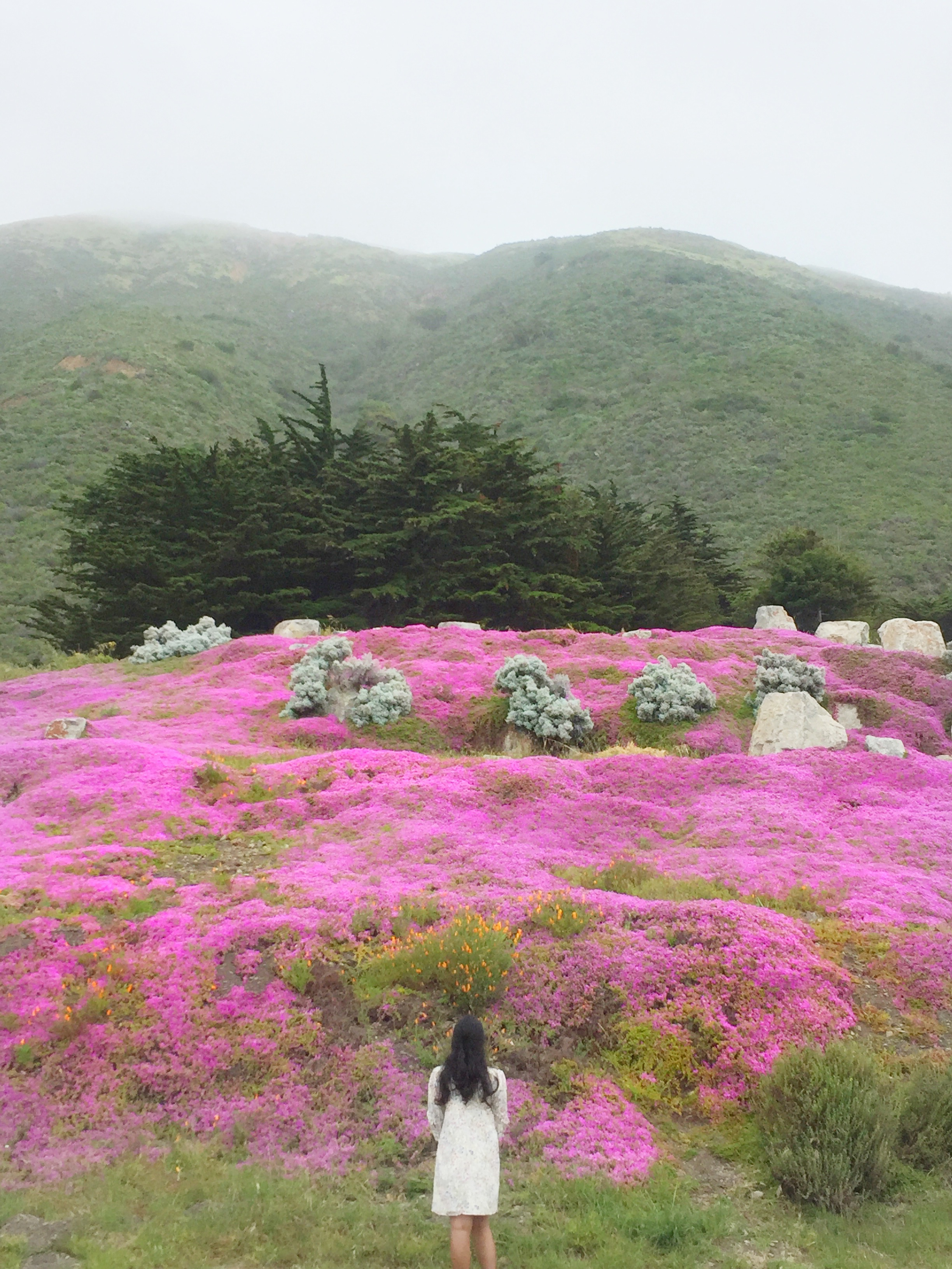 Pink Hills in Big Sur