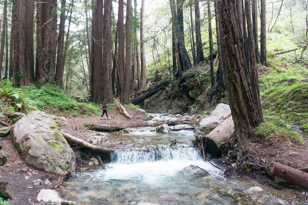 Hiking in Big Sur – Limekiln State Park