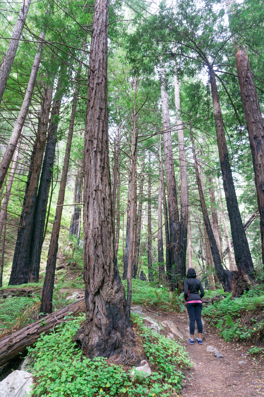 Big Sur Limekiln State Park