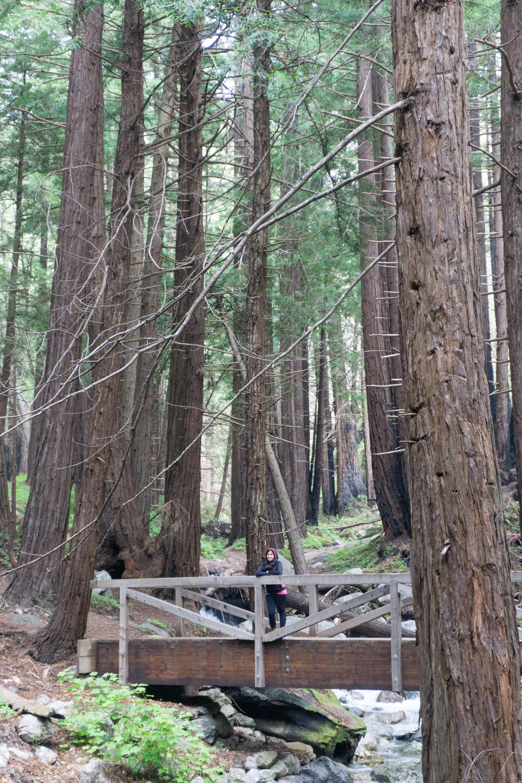 Limekiln State Park Redwoods