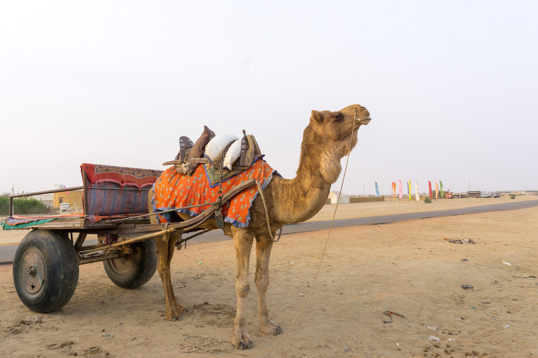 Camel_Cart_Jaisalmer_Her_Travel_Edit