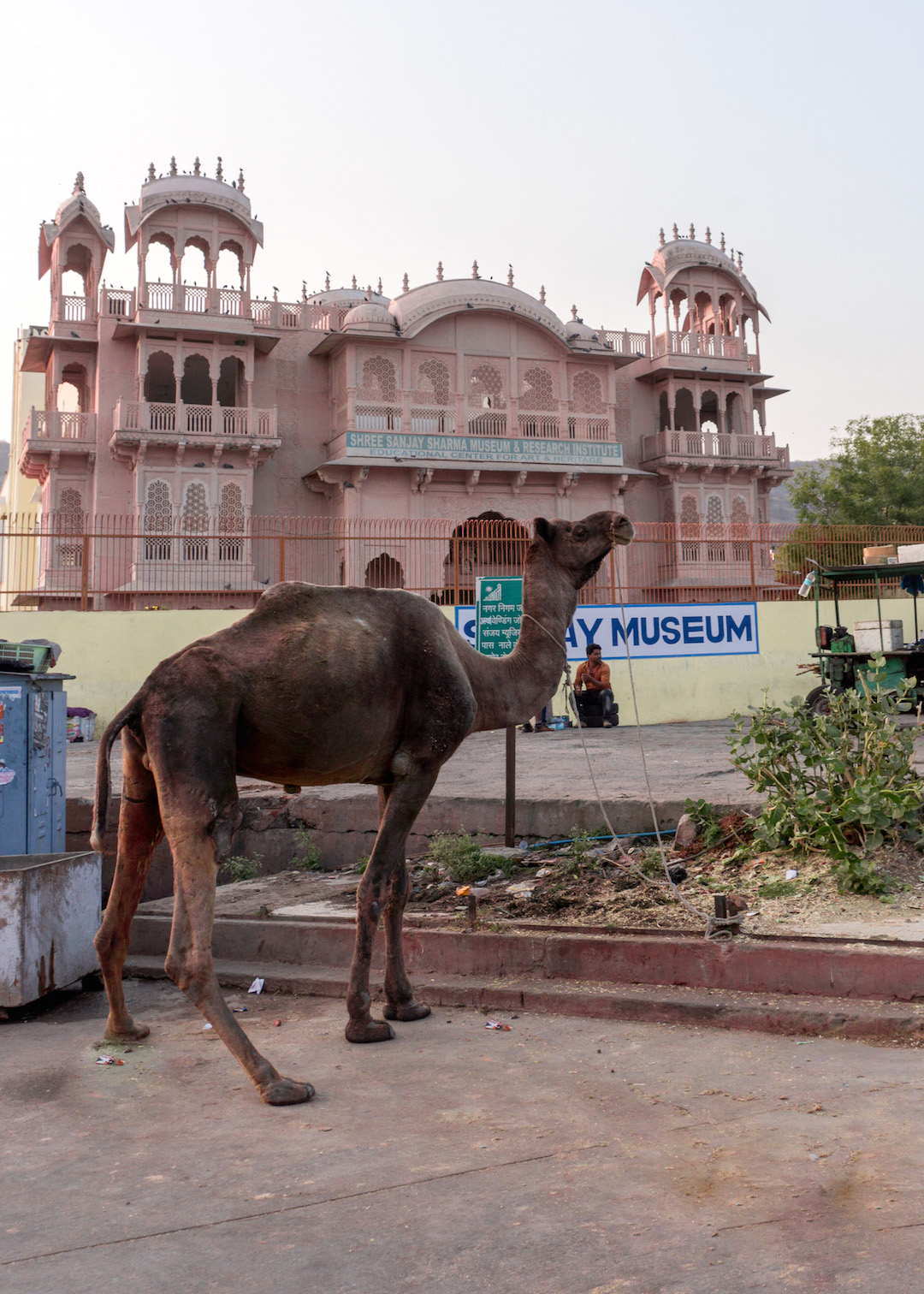 Camels_in_Jaipur_Her_Travel_Edit