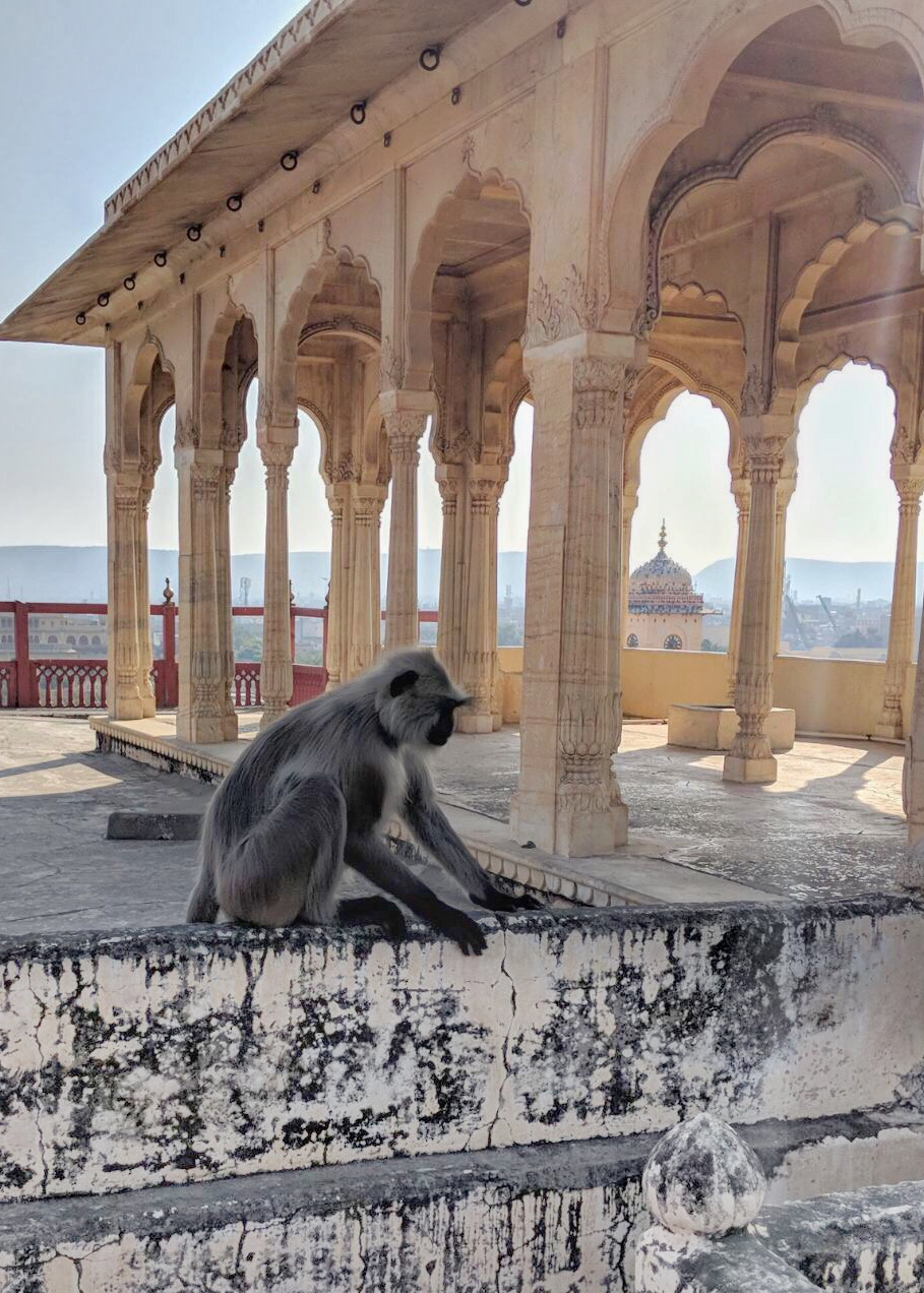 City_Palace_Monkeys_Jaipur_Her_Travel_Edit