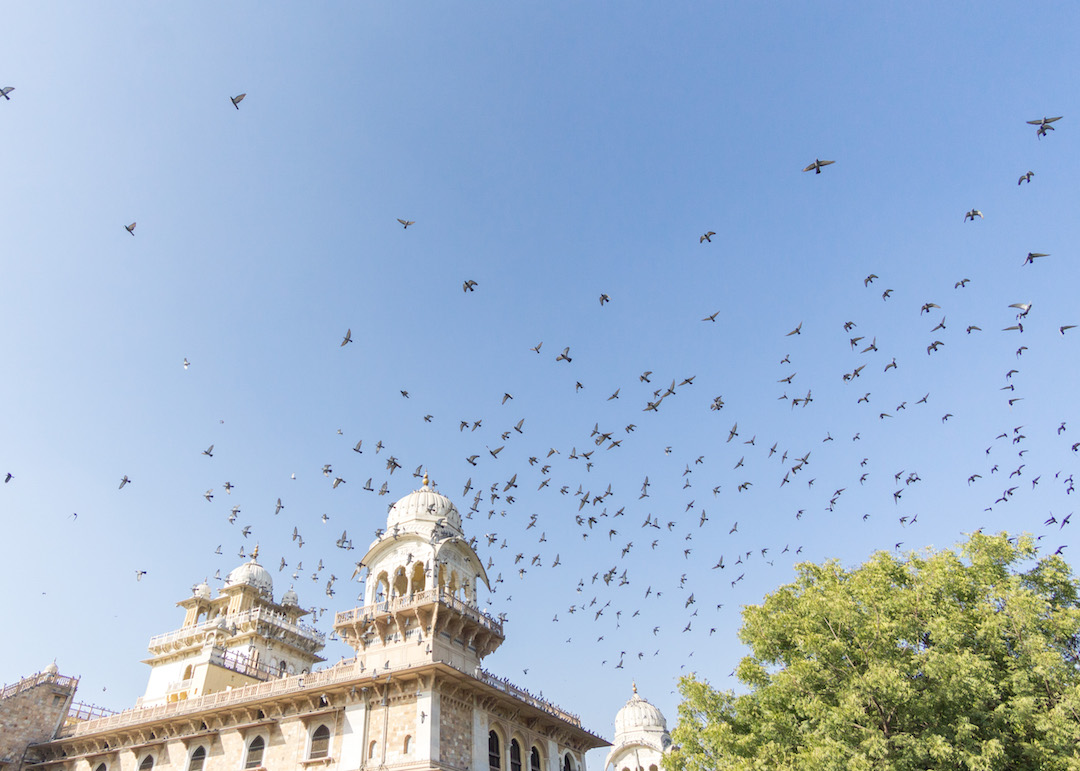 Jaipur_Pigeons_Her_Travel_Edit