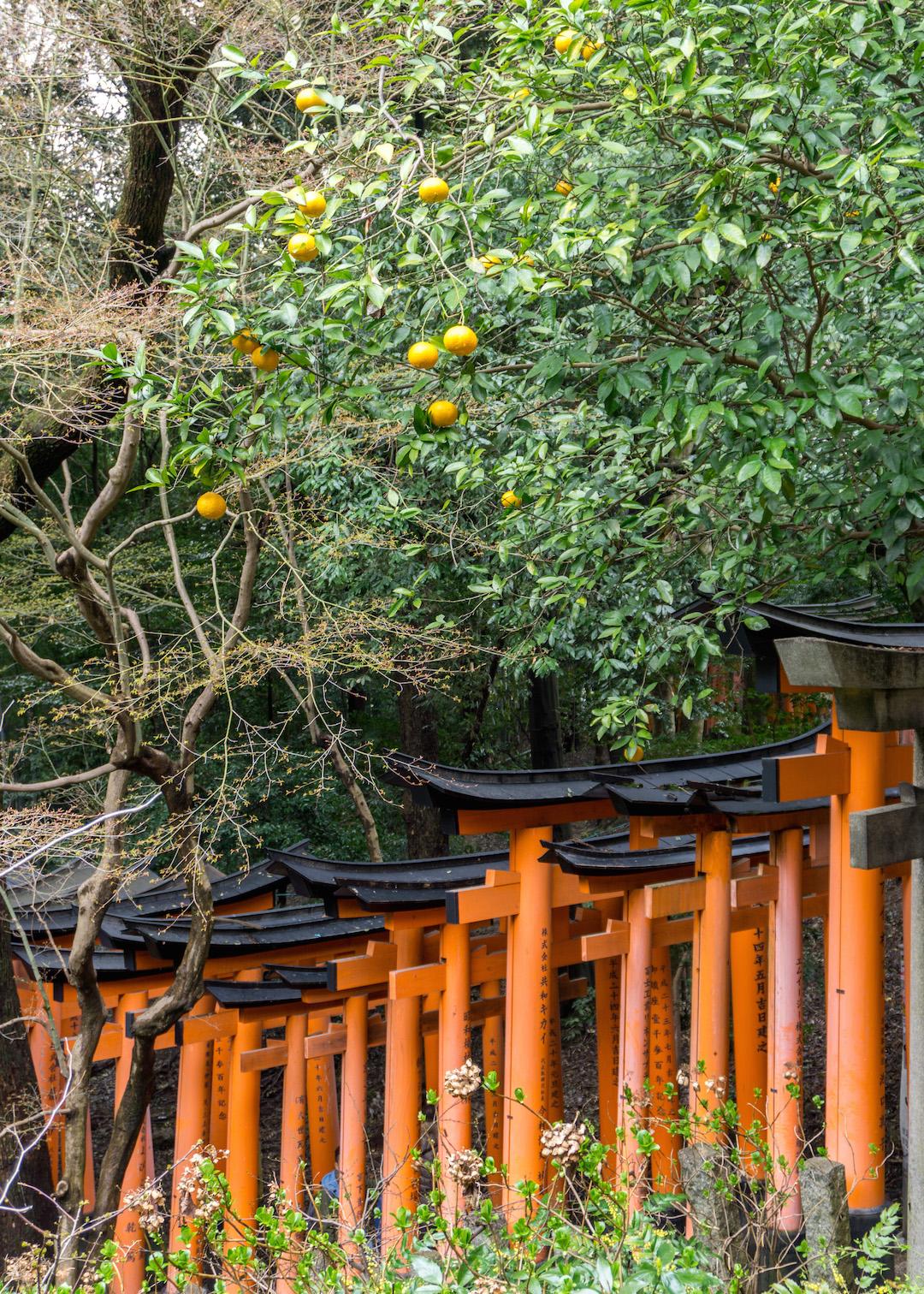 Fushimi Inarii Tori Gates