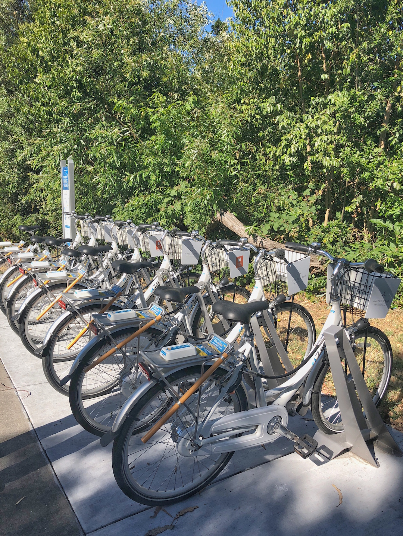 Bikes in Healdsburg