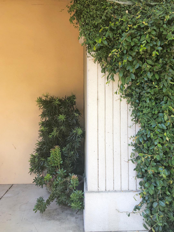 Healdsburg Green Doors