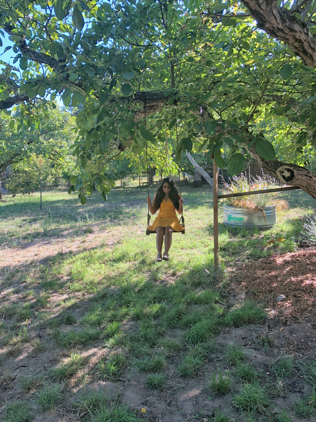 Swing in Little House in Orchard airbnb, Sonoma