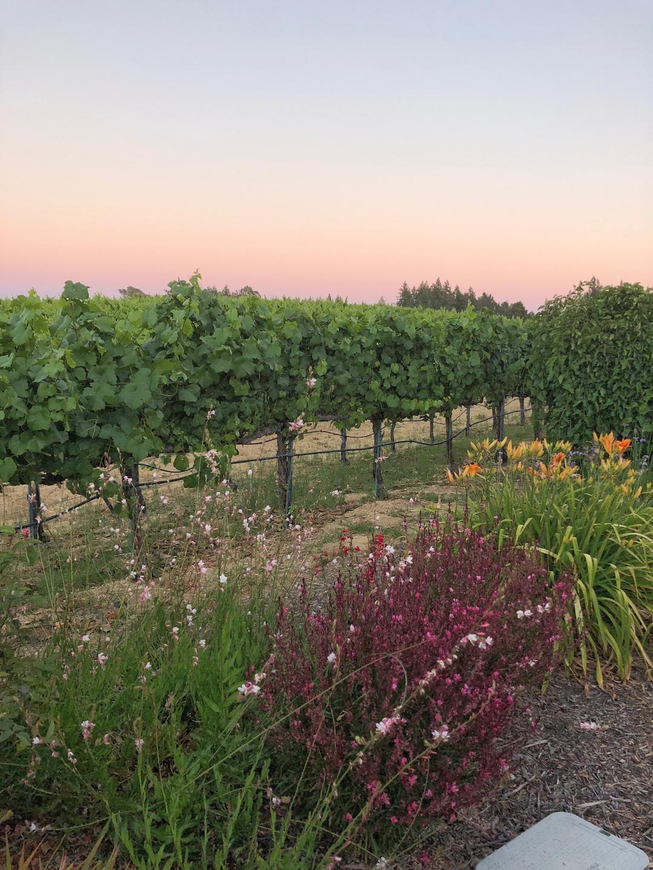 Pink Vineyard Sunset Sonoma