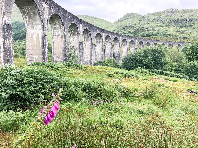 Pink Flowers near the Glenfinnan Viaduct