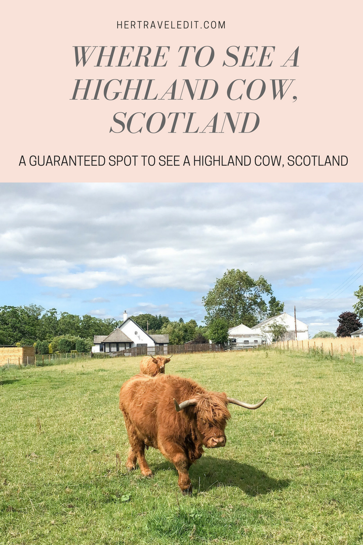 Where to Guaranteed See a Highland Cow, Scotland